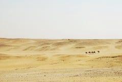 Camel caravane Stock Images