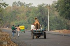 Camel Cart Stock Photo