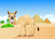 Camel cartoon Stock Photography