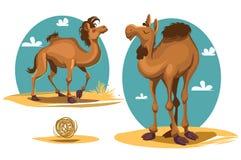 Camel. Cartoon camel. Africa. Desert landscape Vector illustration Stock Image