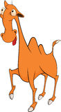 Camel cartoon Stock Images