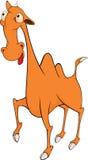 Camel cartoon Stock Images