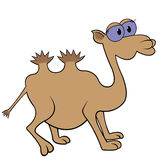 Camel Cartoon Vector Illustration Royalty Free Stock Photo