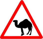 Camel caution red triangular warning road sign, isolated on white background. Camel caution red triangular warning road sign, isolated on white background Royalty Free Stock Photos