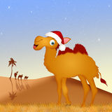Camel with Christmas hat Royalty Free Stock Image