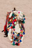 Camel in color decorations Stock Photography