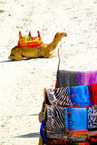 Camel and colorful scarves. On african beach Stock Photography