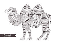 Camel. coloring book Royalty Free Stock Image