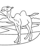 Camel coloring page vector illustration