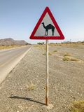 Camel cross sign on desert road. Crossing camel dromedary warning road sign on Oman desert street Stock Photos