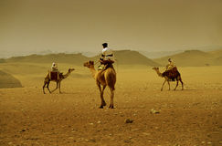 Camel crossing. Three camels and riders head towards each other in the desert outside of Cario stock photography