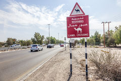 Camel Crossing sign in Abu Dhabi, UAE Royalty Free Stock Images