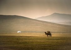 Camel crossing vast landscape with yurt & x28;ger& x29; and mountains in background Royalty Free Stock Photos