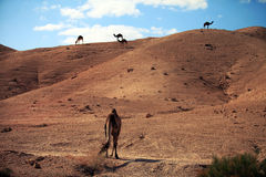 Camel in the desert. Against the blue sky Royalty Free Stock Photo