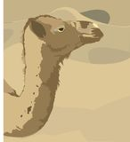 Camel and desert Royalty Free Stock Photos