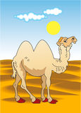 Camel in desert Stock Photos