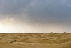 Camel and desert with cloudy sky. It is going to rain in the desert of Kubuq, Inner Mongolia, China Stock Photography
