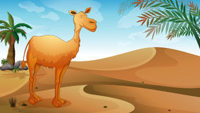 A camel in the desert Royalty Free Stock Images