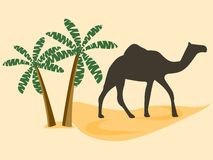 Camel in the desert, palm trees. Vector illustration. Royalty Free Stock Images