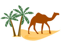 Camel in the desert, palm trees. Vector illustration. A camel and two palm trees in the desert sands Stock Images