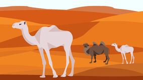 Camel in the desert, sand hills, dunes, animals. Camel in the desert sand hills, dunes, clear blue sky. Animals and nature. In flat polygon style for design Stock Image