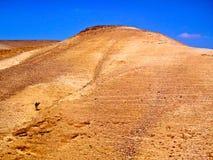 Camel in the Desert. Camel wandering the desert near Masada Israel Royalty Free Stock Photo
