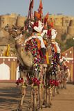 Camel Display Team, Jaisalmer Stock Images