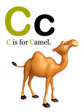 Camel domastic animal with alphabates. 3d rendered illustration of Camel domastic animal with alphabates Royalty Free Stock Photos