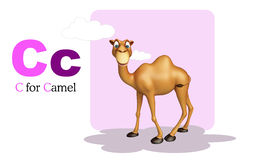 Camel domastic animal with alphabates Stock Image