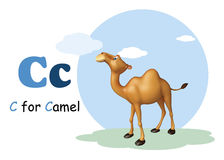 Camel domastic animal with alphabates Stock Images