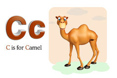 Camel domastic animal with alphabates Stock Photo