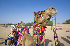 Camel dress Royalty Free Stock Image