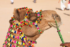 Camel dress Royalty Free Stock Images