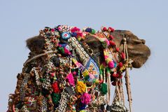Camel dressed up for the trade fair. Pushkar, India Royalty Free Stock Images