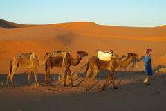 Camel driver in african desert Stock Photo