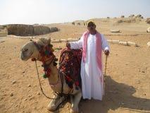 Camel driver at Giza pyramids Stock Images