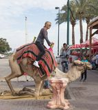 The camel driver helps the visitor to descend from the camel in Yeriho in Israel. Yeriho, Israel, November 25, 2017 : The camel driver helps the visitor to Royalty Free Stock Photography