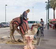 The camel driver helps the visitor to descend from the camel in Yeriho in Israel. Yeriho, Israel, November 25, 2017 : The camel driver helps the visitor to Stock Image