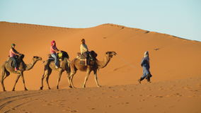 Camel driver with tourist camel caravan Royalty Free Stock Images