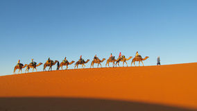 Camel driver with tourist camel caravan in desert stock images