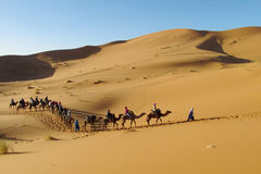 Camel driver with tourist camel caravan in desert royalty free stock image