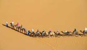 Camel driver with tourist camel caravan in desert Stock Photos