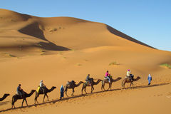 Camel driver with tourist camel caravan in desert Royalty Free Stock Images