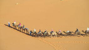 Camel driver with tourist camel caravan in desert Royalty Free Stock Photo