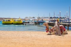 Camel with a drover on the beach Royalty Free Stock Images