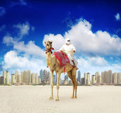 Camel on Dubai Marina Beach