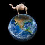 Camel and the earth, including elements furnished by NASA Royalty Free Stock Photography