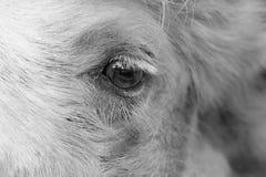 Camel eye Stock Photos