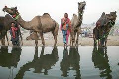 Camel Fair Pushkar 2015 Royalty Free Stock Photos