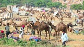 Camel fair stock video footage